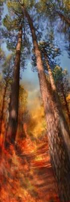 Incendie 02