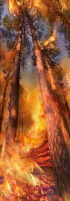 Incendie 03